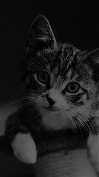 Cute Cat Look Dark Bw Animal Love Nature iPhone 8 wallpaper