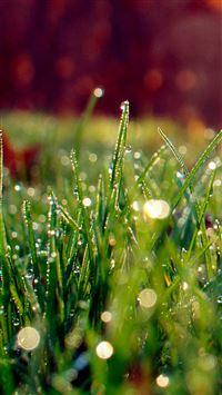 Dew On Grass Sunshine iPhone 8 wallpaper