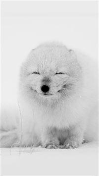 Arctic Fox Happy Moment iPhone 8 wallpaper
