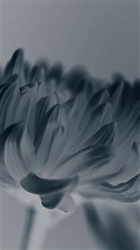 Silk Flower Blue Mutant Nature iPhone 8 wallpaper