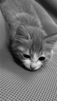 Cat Cute Animal Dark Lying Bed iPhone 8 wallpaper