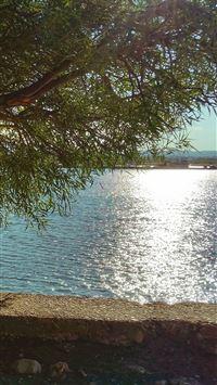 Summer Lake View Tree Sunshine Nature iPhone 8 wallpaper