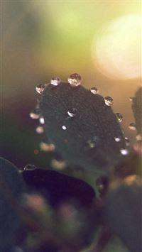 Nature Morning Dew Leaf Flower Rain Flare iPhone 8 wallpaper
