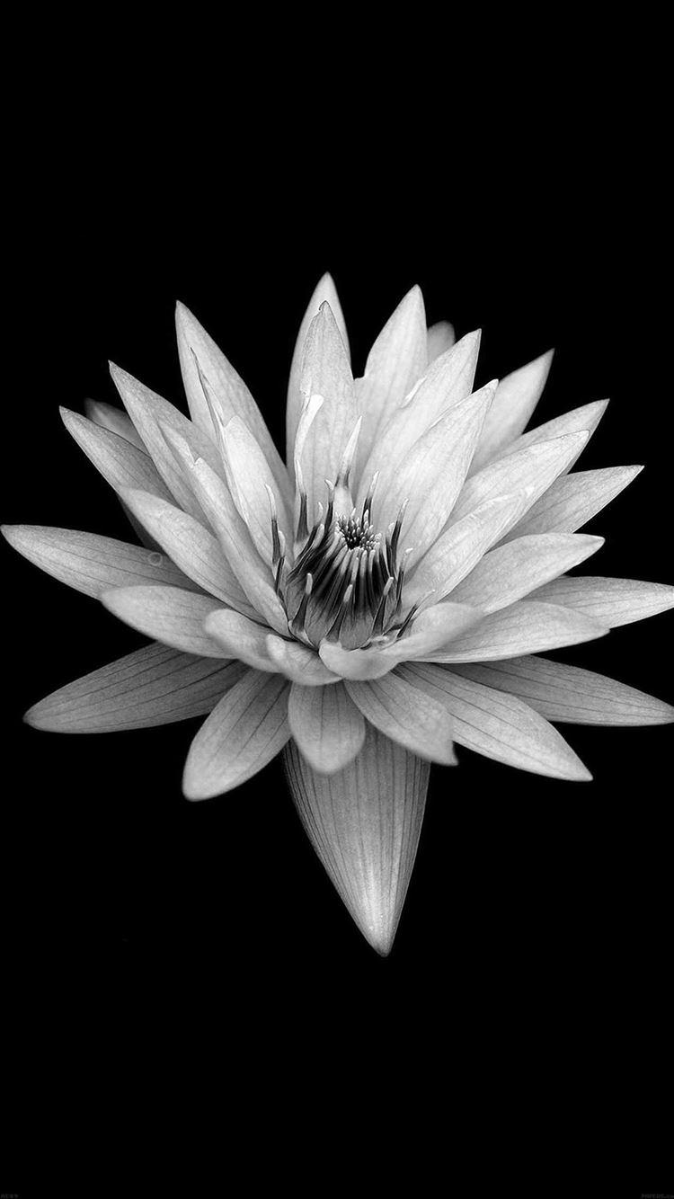 Dark Flower Black Xperia Z Background iPhone 8 wallpaper