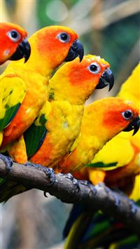 Mocking Bird Family Nature Art iPhone 8 wallpaper