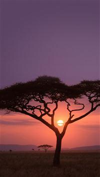 Solo Tree Safari Africa Sunset iPhone 8 wallpaper