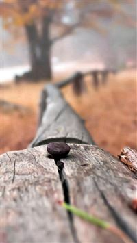 Nail On Wooden Fence Bokeh Blur iPhone 8 wallpaper