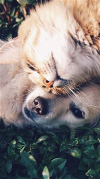 Cat And Dog Animal Love Nature Pure iPhone 8 wallpaper