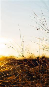 Sunset Field Sky Nature iPhone 8 wallpaper