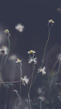 Flower Dark Bokeh Nature iPhone 8 wallpaper