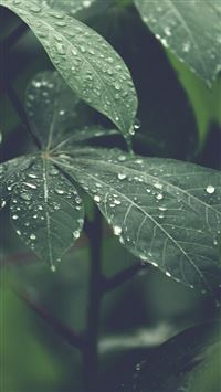 Rain Forest Wood Leaf Flower Nature iPhone 8 wallpaper