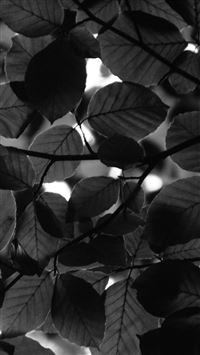 Tree Blossom Nature Leaf Green Dark Bw iPhone 8 wallpaper