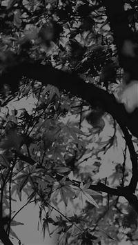 Fall Tree Leaf Autumn Nature Mountain Bw Dark iPhone 8 wallpaper