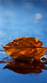 Leaf autumn iPhone 8 wallpaper