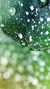 Raindrops on the leaves iPhone 8 wallpaper