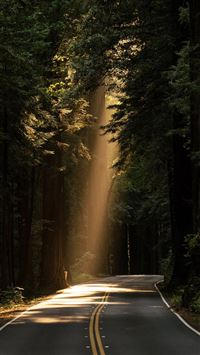 Light road forest iPhone wallpaper