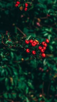 Hawthorn tree berries blur iPhone 8 wallpaper