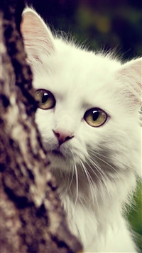 Cat white fluffy look out tree iPhone wallpaper