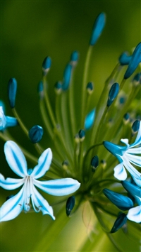 Flowers blue green macro petals iPhone 8 wallpaper