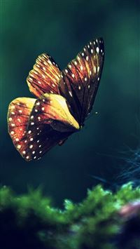 Butterfly grass flying wings iPhone wallpaper