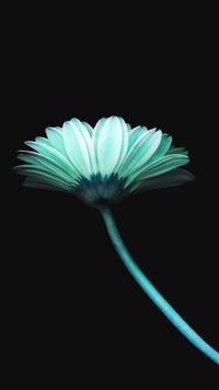 Lonely flower dark blue simple minimal iPhone 8 wallpaper