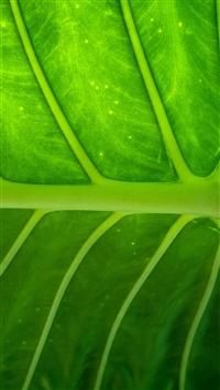 Plant leaf texture iPhone wallpaper
