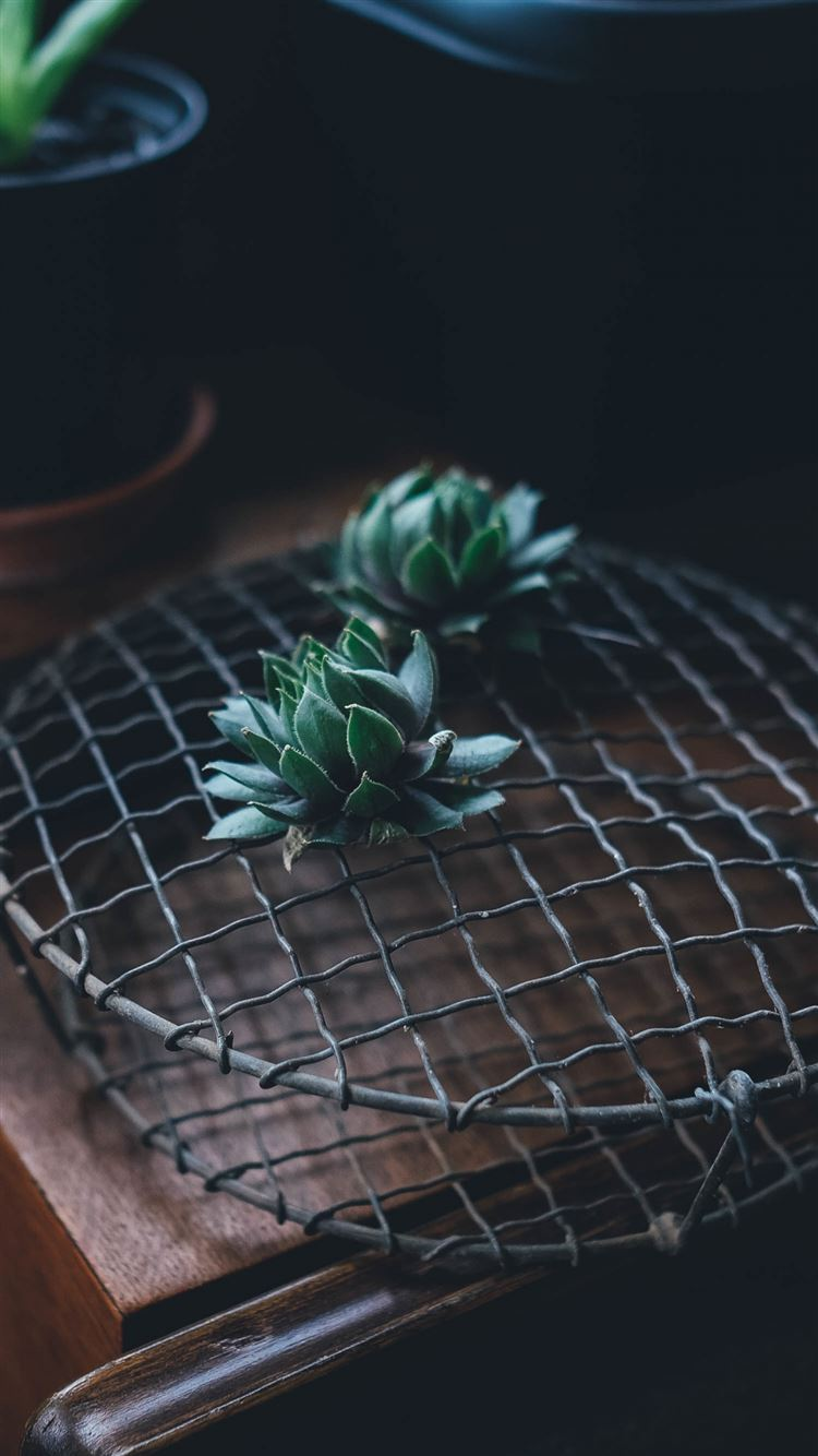 Cactus houseplant table iPhone 8 wallpaper
