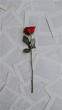Rose books texts iPhone 8 wallpaper