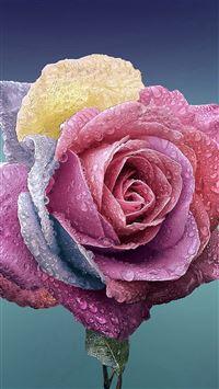 Flower rose art illustration iPhone 8 wallpaper