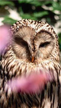 Ural-Owl iPhone 8 wallpaper