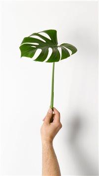 Monstera-Leaf iPhone 8 wallpaper