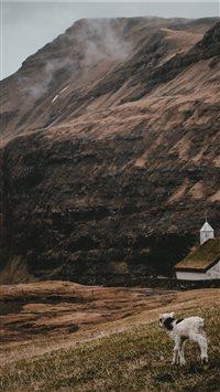 Lamb-at-Saksun--Faroe-Islands iPhone 8 wallpaper