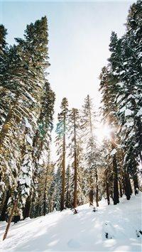 Castle-Peak-wilderness iPhone 8 wallpaper