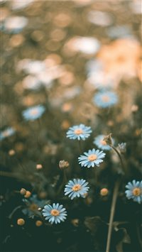 flower iPhone 6(s)~8(s) wallpaper