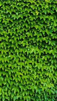 foliage iPhone 6(s)~8(s) wallpaper