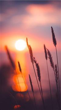 Sunset iPhone 6(s)~8(s) wallpaper
