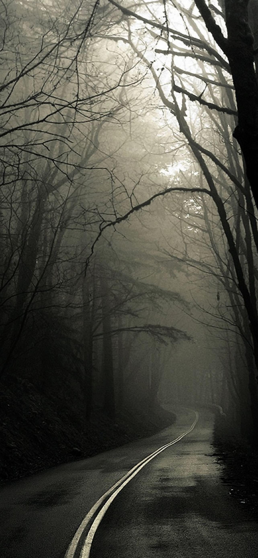 Dark Road Forest IPhone Se Wallpaper