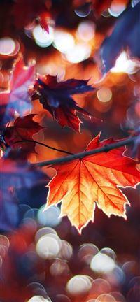 Autumn Leaves iPhone se wallpaper