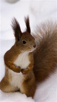 Little Squirrel In Snow Field iPhone se wallpaper