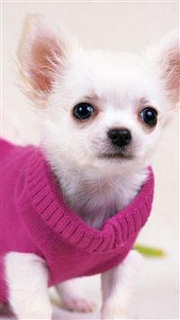 Cute Pretty Dog In Red Sweather iPhone se wallpaper