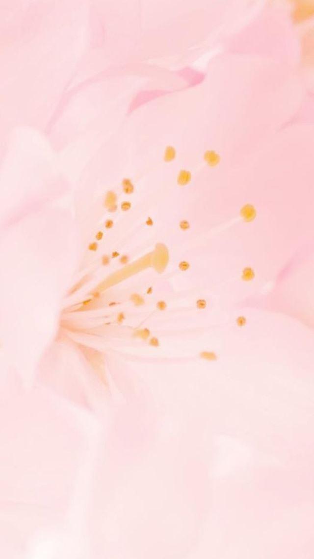 Pure Romantic Pink Flower Macro IPhone Se Wallpaper Download
