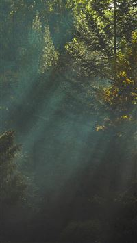 Wood Nature Tree Sunshine Light iPhone se wallpaper