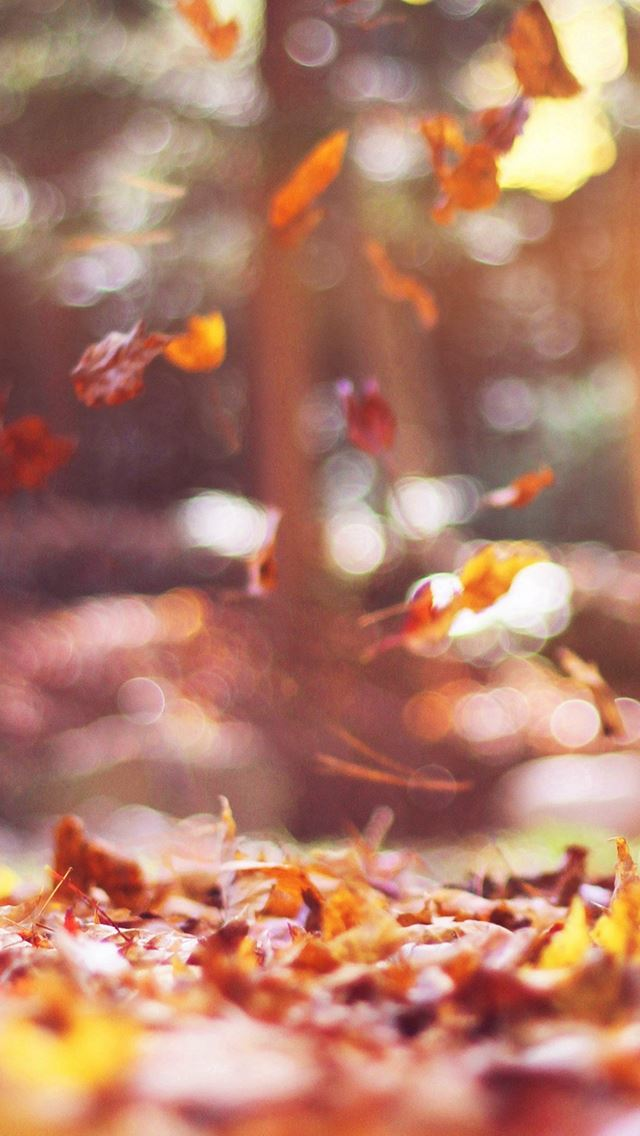 Fall Leaves Nature Tree Year Sad Flare IPhone Se Wallpaper Download