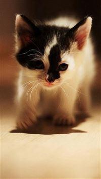 Cute Walking Speckle Little Kitten Cat iPhone se wallpaper