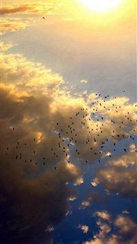Sky Bird Fly Summer Sun Nature iPhone se wallpaper