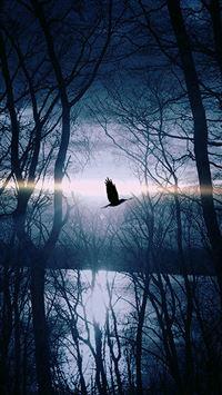 Wood Night Dark Nature Bird Fly Lake iPhone se wallpaper