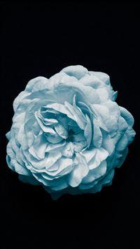 Flower Center Blue Minimal Simple iPhone se wallpaper