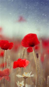 Fantasy Poppy Flower Field Plant Blur iPhone se wallpaper