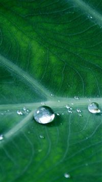 Leaf Water Spring Green Nature Rain iPhone se wallpaper