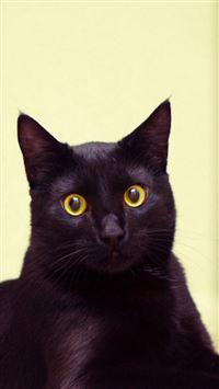 Cat Black Cat Lying Beautiful iPhone se wallpaper